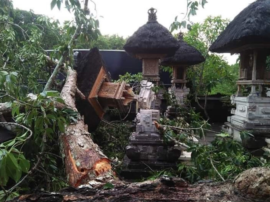 POHON Kepuh yang tumbang di Pura Dalem Kahyangan Desa Adat Pecatu, Minggu (16/2/2020).