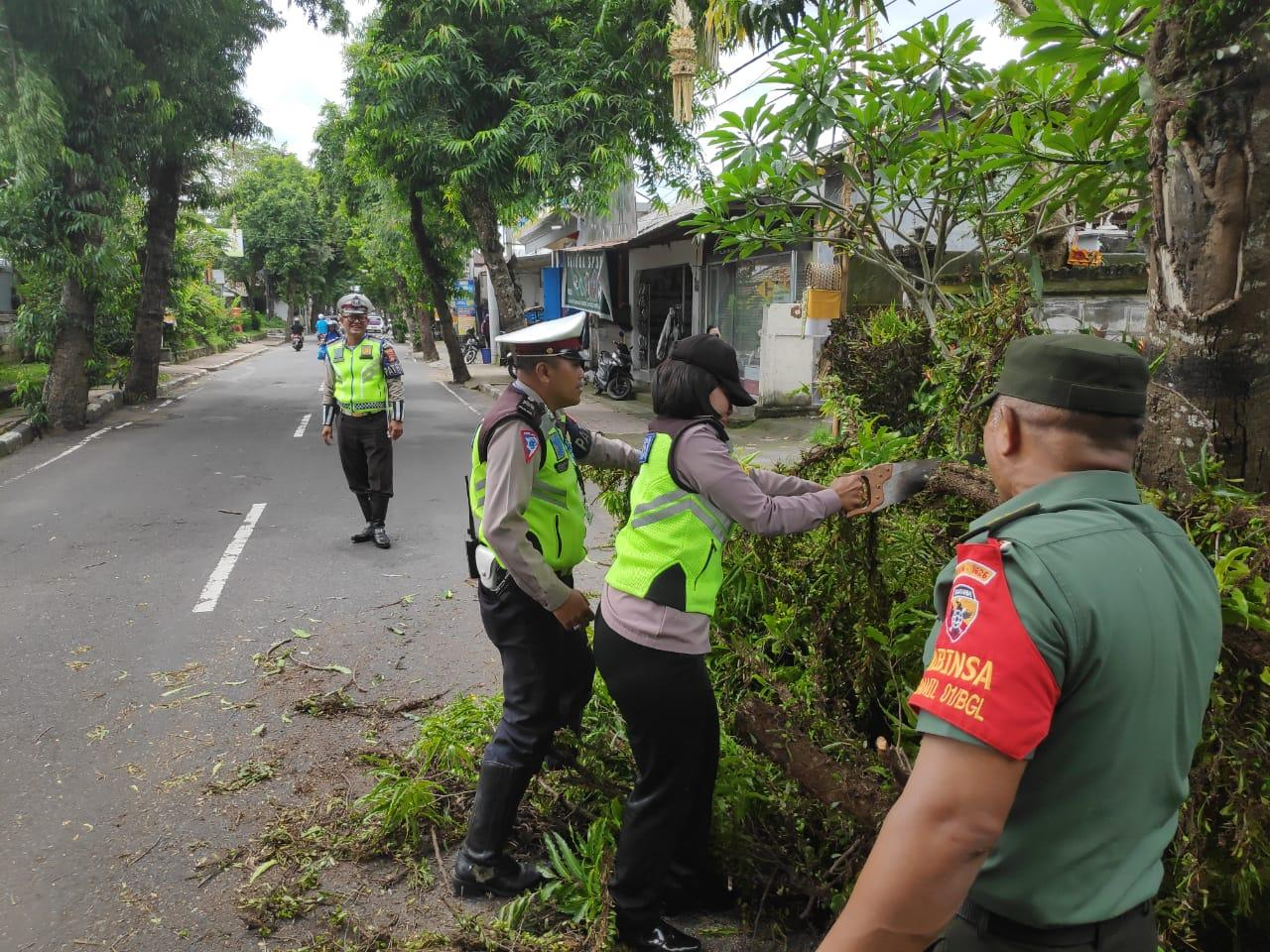 SEJUMLAH petugas membersihkan pohon tumbang di Jalan Kusuma Yudha, Bangli, Jumat (6/3/2020). Foto: nengah adi suda dharma