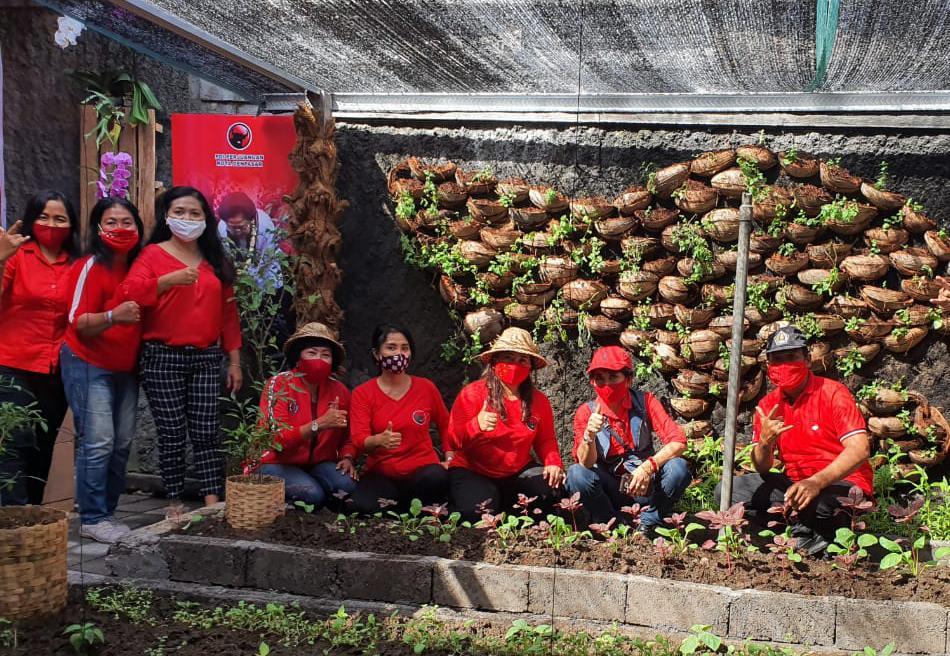 TIM koordinator saat memonitoring kegiatan 'Kebun Sayuran Rakyat' dengan konsep urban farming di DPC PDI Perjuangan Kota Denpasar. Foto: ist