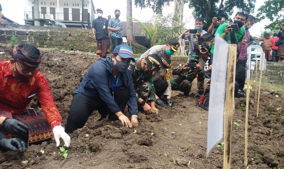 AKSI massal menanam bibit cabai dipimpin Bupati Tabanan Ni Putu Eka Wiryastuti, di halaman belakang Wantilan Desa Adat Bedha, Tabanan, Kamis (25/6). Foto: gap