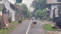 Foto: Nyepi Desa Adat Kesimpar SUASANA Nyepi Desa Adat Kesimpar, Kecamatan Abang, Karangasem, Selasa (7/7). Foto: nad