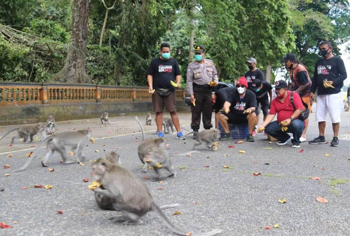 Foto: WABUP SANJAYA WABUP Tabanan I Komang Gede Sanjaya menyempatkan memberi pakan kera, saat berkunjung ke DTW Alas Kedaton, Minggu (23/8). Foto: gap
