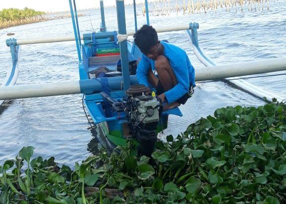 SERBUAN eceng gondok di perairan pantai timur Desa Adat Tuban. Foto: ist