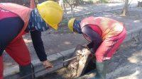 Foto: 02388 Badung Genangan Air di Siligita PEMBERSIHAN kondisi inlet di Jalan Siligita. Foto: ist