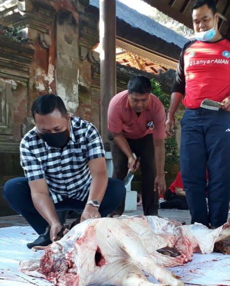 BUPATI Gianyar, I Made Mahayastra, ikut memotong babi untuk dibagikan kepada staf. Foto: adi