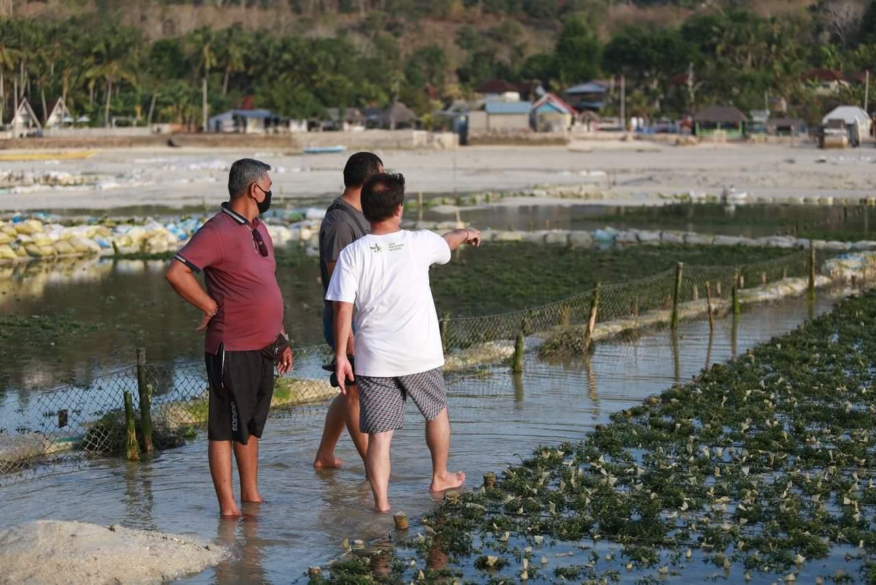BUPATI Suwirta mengunjungi lokasi penanaman rumput laut di sebelah barat Jembatan Kuning. Foto: ist