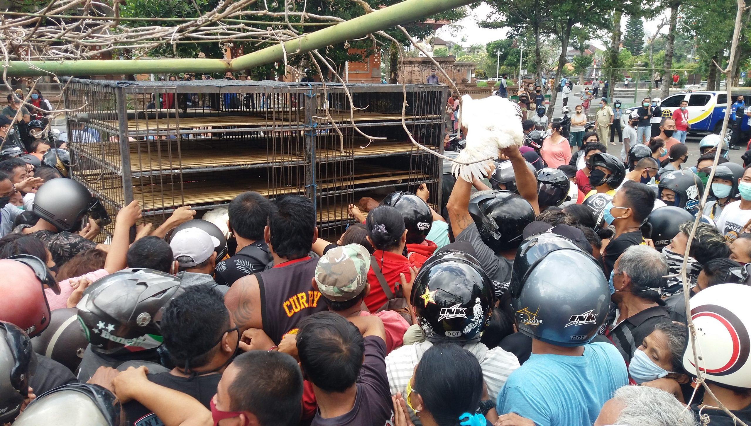 Foto: ayam - gagah PETERNAK yang tergabung dalam Pinsar Broiler Bali membagikan sekitar 700 ekor ayam hidup kepada masyarakat terdampak Covid-19 di Tabanan, Senin (31/8). Foto: gap