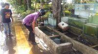 PEDAGANG ikan hias di Jalan Sudirman, Kota Negara. Jika pelaku usaha lain kelimpungan di tengah pandemi, sebaliknya omzet penjualan ikan hias meningkat di tengah wabah Corona. man