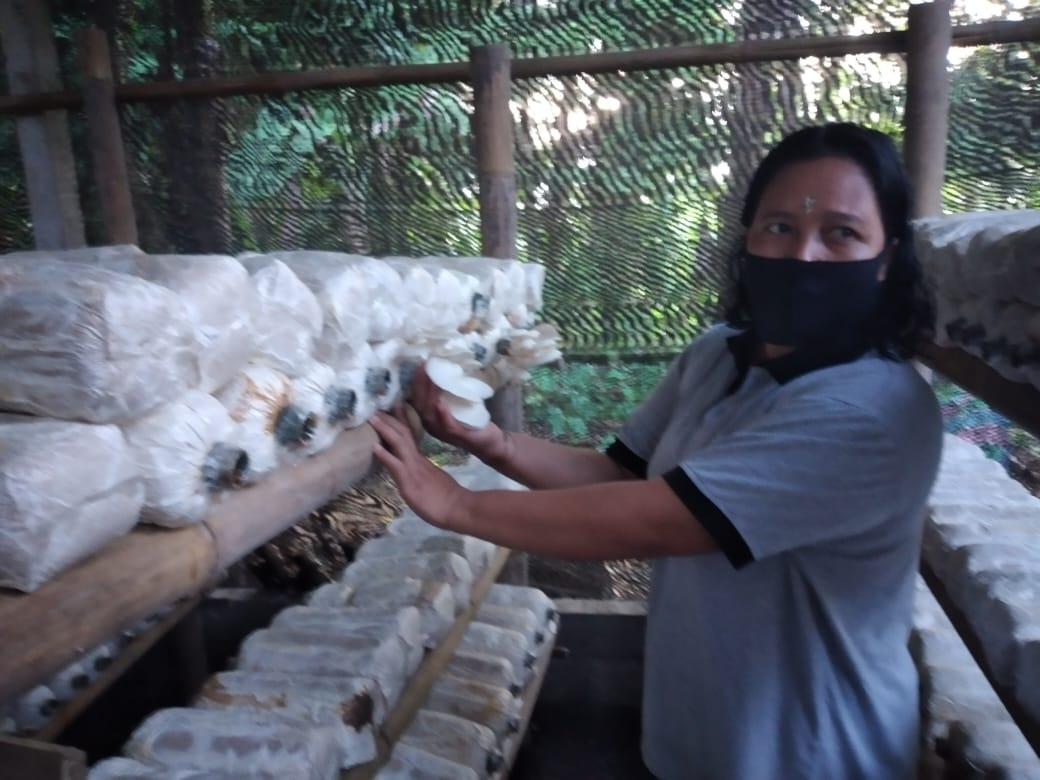 PETANI jamur tiram, Ni Nyoman Darsani asal Dusun Abang Kelod, Desa Abang, Kecamatan Abang, Karangasem saat menunjukkan budidaya jamur tiram Kelompok Wanita Tani. Foto: nad