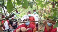 CABUP Tabanan, I Komang Gede Sanjaya, baru-baru ini menyempatkan diri untuk meninjau kebun kakao, dan kemudian melihat proses pengolahan kakao menjadi cokelat siap saji di 'Cau Cokelat Bali'. Foto: ist