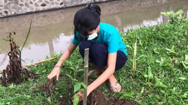 PENANAMAN tanaman upakara di Beji Merak, Banjar Abasan, Desa Singapadu Tengah, Sukawati. Foto: adi