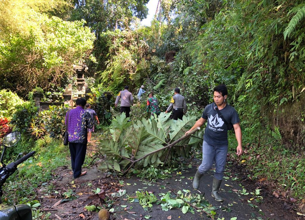 DUA pohon enau tumbang dan sempat menutup akses jalan menuju Subak Pucang, di Banjar Dinas Kelaci, Desa Marga Dauh Puri, Kecamatan Marga, Selasa (13/10/2020). Foto: ist