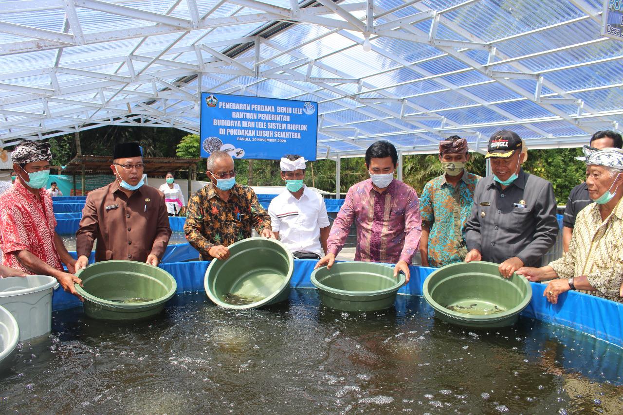 BUPATI Made Gianyar, menebar benih ikan lele dengan Kelompok Pembudidaya Ikan Kecil (Pokdakan) Lusuh Sejahtera di Banjar Dinas Tambahan Kelod, Desa Jehem, Kecamatan Tembuku, Selasa (10/11/2020). Foto: ist