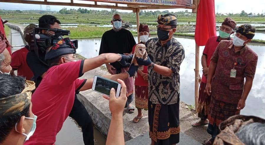ANGGOTA Komisi IV DPR RI, I Made Urip, saat meresmikan Jalan Usaha Tani Subak Bengkel, di Desa Bengkel, Kecamatan Kediri, Tabanan, dengan ditandai pelepasan seekor burung hantu, Rabu (25/11/2020). Foto: ist