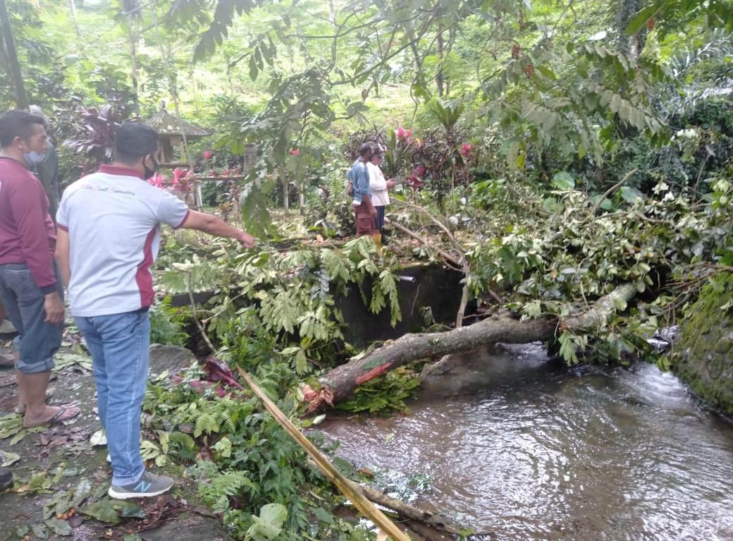 TKP seorang ABG yang tewas tertimpa cabang pohon ketapang, di Beji Telabah Sipuh, Banjar Dinas Pacung, Desa Senganan, Kecamatan Penebel, Minggu (29/11/2020). Foto: ist