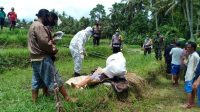 PROSES evakuasi jenazah seorang warga yang ditemukan tergeletak di pematang sawah di Banjar Dinas Sambian Tengah, Desa Timpag, Kecamatan Kerambitan, Tabanan, Kamis (26/11/2020). Foto: ist