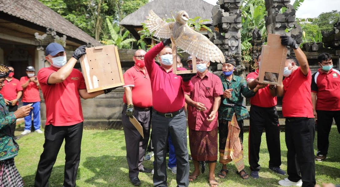 BUPATI Gianyar Made Mahayastra melepas burung hantu di kawasan Subak Taro Kelod, Tegallalang. Foto: adi