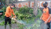 MENGANTISIPASI cuaca ekstrem seperti hujan dan angin kencang, BPBD Tabanan merabas sejumlah pohon perindang di pinggir jalan yang dinilai bisa membahayakan, Selasa (1/12/2020). Foto: ist