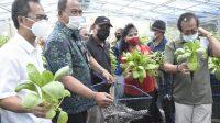 PANEN perdana budidaya dengan bioflok dan hidroponik di Kebun Agro Learning Center, Selasa (26/1/2021) yang ditandai dengan pengambilan ikan lele dan sayur oleh Kadis Perikanan dan Ketahanan Pangan Denpasar. Foto: ist