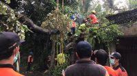 ANGGOTA TRC BPBD Gianyar memotong dan membersihkan pohon tumbang. Foto: adi