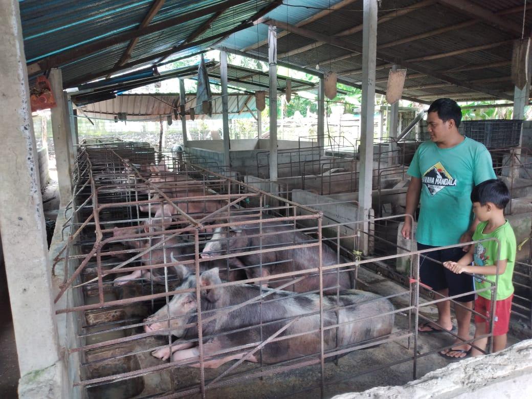 PETERNAK babi di Karangasem. Melonjaknya harga daging babi beberapa pekan terakhir membuat para pengepul susah, karena penjualan tidak stabil. Foto: nad