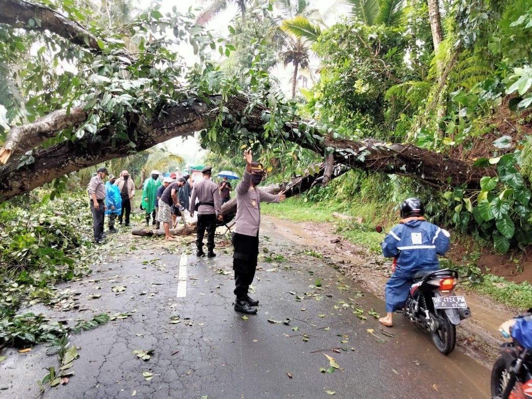 POHON tumbang menyebabkan jalan raya penghubung dari Bangli-Kayuambua dan sebaliknya macet sekitar 3 km, Senin (4/1/2021). Foto: ist