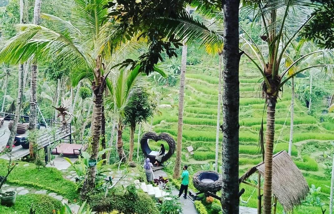 BERBAGAI spot swafoto di Uma Ceking Tegalalang. Foto: ist