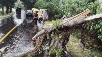 PERSONEL Polsek Selemadeg Barat memotong kayu pohon yang tumbang di Banjar Suraberata, Desa Lalanglinggah, Selemadeg Barat, Tabanan. Foto: ist