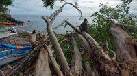 HUJAN lebat disertai angin kencang melanda sejumlah kawasan di Karangasem, Selasa (23/2/2021) dini hari. Di Desa Bunutan, pohon beringin besar di pinggir pantai juga tumbang dan menghajar tiga jukung milik nelayan setempat. Foto: nad