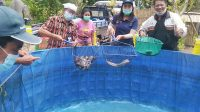 PANEN perdana budidaya ikan lele dengan sistem bioflok di Kelompok Budidaya Ikan (Pondakan) Lusuh Sejahtera, Banjar Tambahan Kelod, Desa Jehem. Foto: gia