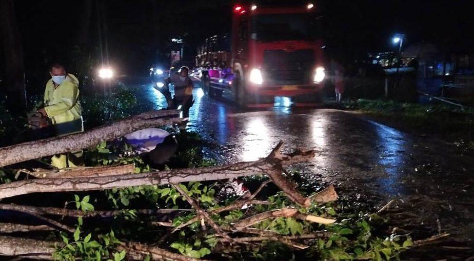 POHON tumbang terjadi di beberapa titik lokasi jalur Denpasar-Gilimanuk di Kabupaten Tabanan, Rabu (3/2/2021) petang. Foto: ist