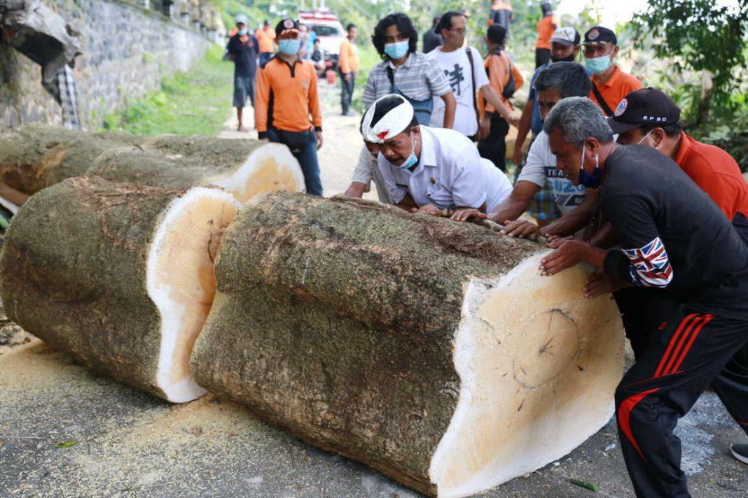 WABUP Made Kasta ikut membersihkan potongan pohon pule di Setra Desa Akah, Klungkung, yang tumbang, Kamis (11/2/2021). Foto: ist