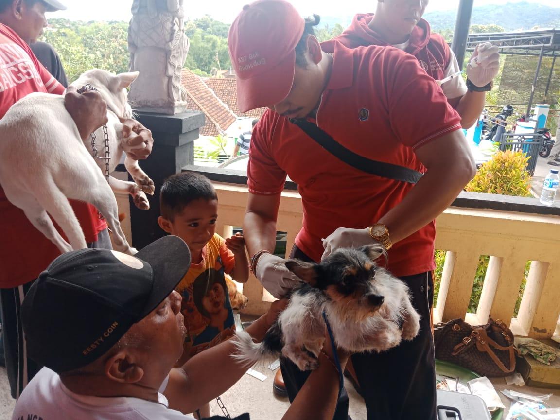 KEGIATAN vaksinasi rabies pada anjing beberapa waktu lalu yang dilakukan Distan Buleleng. Foto: rik