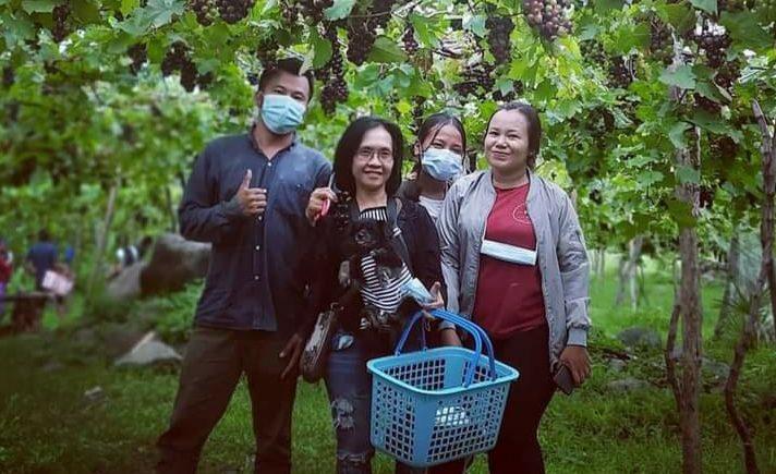 """BELASAN hektar lahan tandus di kawasan Desa Bunutin, Kecamatan Abang, Karangasem """"disulap"""" menjadi kebun anggur. Ide kreatif ini lahir dari I Wayan Mara, warga setempat. Saat panen pertama dan kedua banyak pengunjung yang datang untuk berekreasi, juga membeli anggur. Foto: ist"""