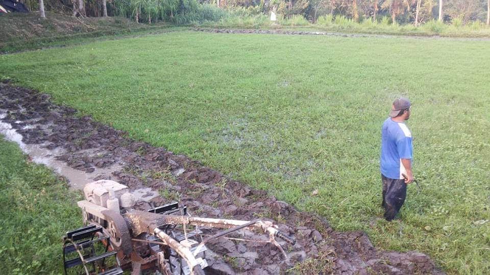 PETANI di Gianyar kekurangan alsintan untuk bisa menggarap pertanian secara maksimal. Foto: adi