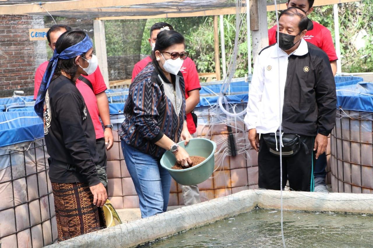 PUTRI Koster saat memberi pakan ikan di bioflok. Foto: ist