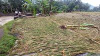SAWAH berisi tanaman padi milik warga Desa Gegelang, Manggis, Karangasem ludes diterjang banjir bandang. Foto: nad