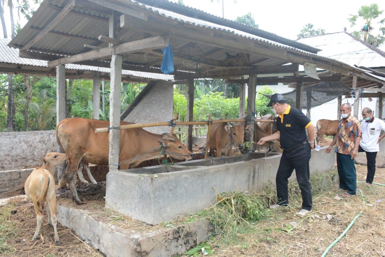 SUGAWA Korry memeriksa kondisi Simantri dan berdiskusi dengan pengurus Simantri di Desa Musi, Kecamatan Gerokgak, Buleleng. Foto: ist