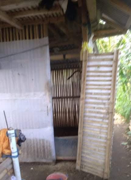 KANDANG bebek yang kosong dan pintu yang dicongkel maling. Foto: ist