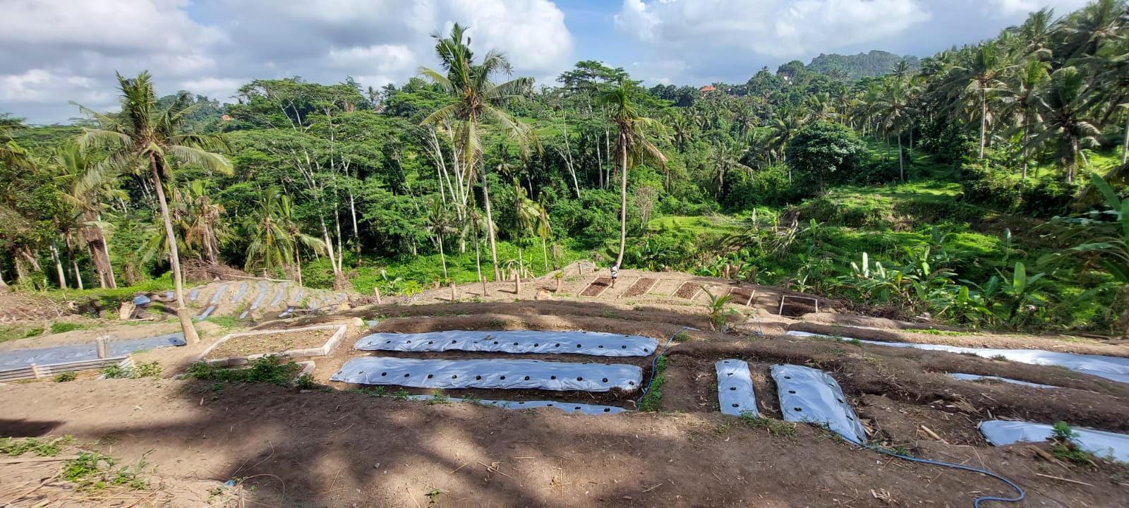 LAHAN untuk pertanian hortikultura di Desa Sidan, Gianyar. Foto: adi