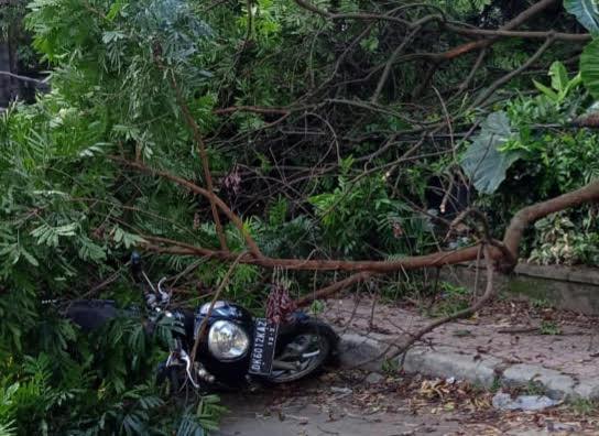 SEPEDA motor tertimpa pohon di Banjar Geriya Desa Melinggih Payangan. Foto: ist