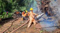 EVAKUASI pohon tumbang yang menutup jalan di Banjar Angkling, Desa Bakbakan, Gianyar. Foto: adi