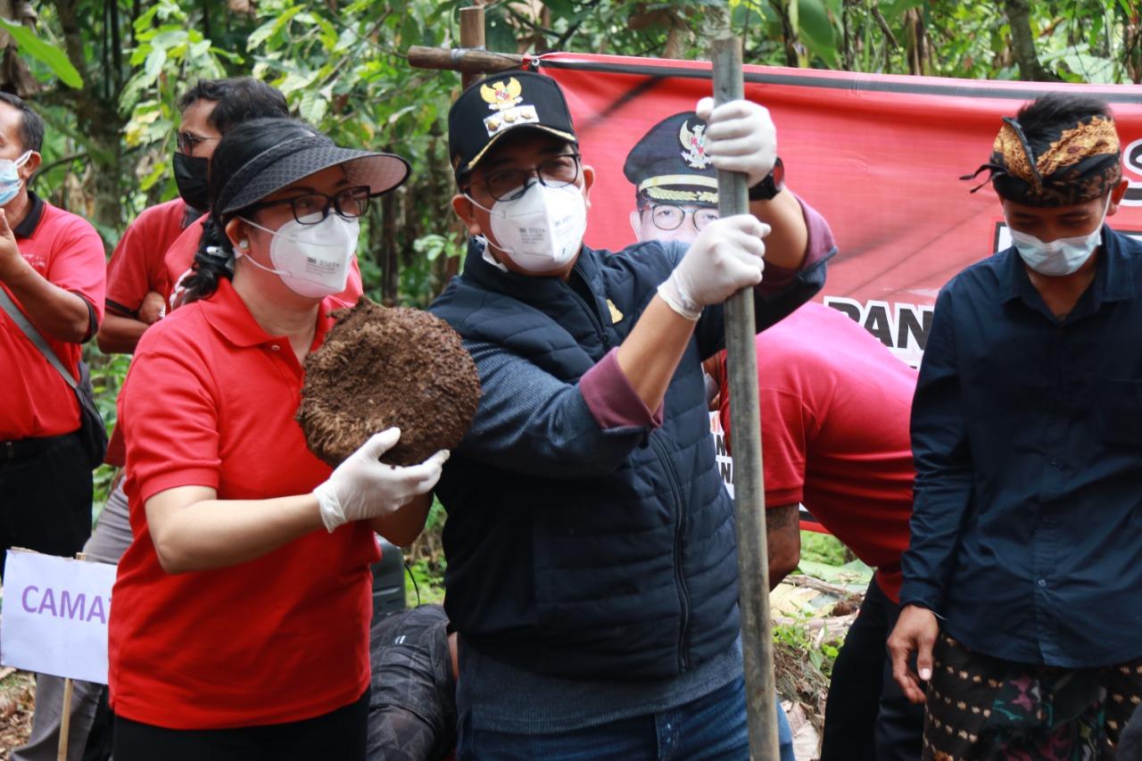 BUPATI Tabanan, I Komang Gede Sanjaya, melakukan panen perdana tanaman porang bersama Kelompok Tani Porang Sari, di Banjar Nyuhgading, Desa Mundeh, Kecamatan Selemadeg Barat, Jumat (20/8/2021). Foto: ist