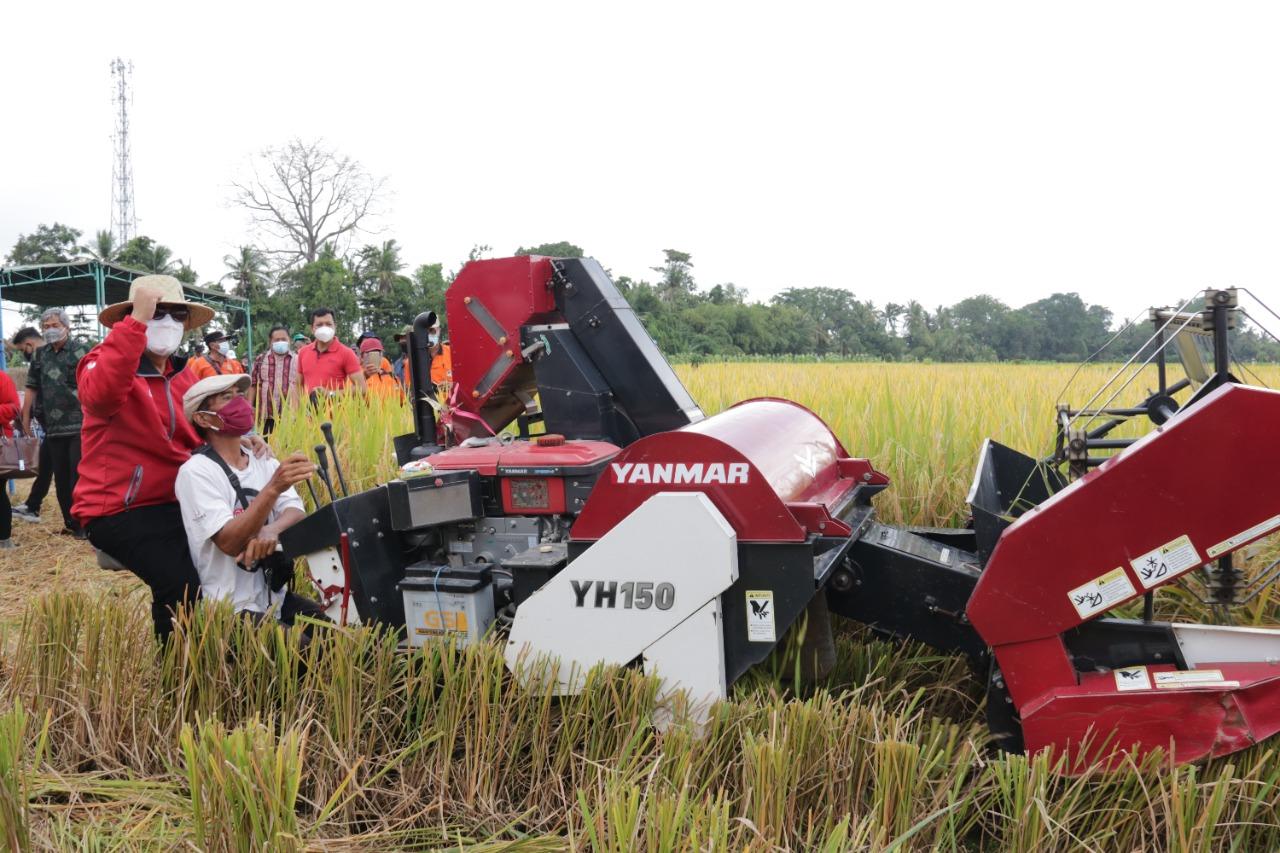 BUPATI Tabanan, I Komang Gede Sanjaya, baru-baru ini menghadiri acara panen perdana padi sertani-13, di Subak Ureg Tempek Munduk Sangkur, Banjar Pengayehan, Desa Gubug, Tabanan. Foto: ist