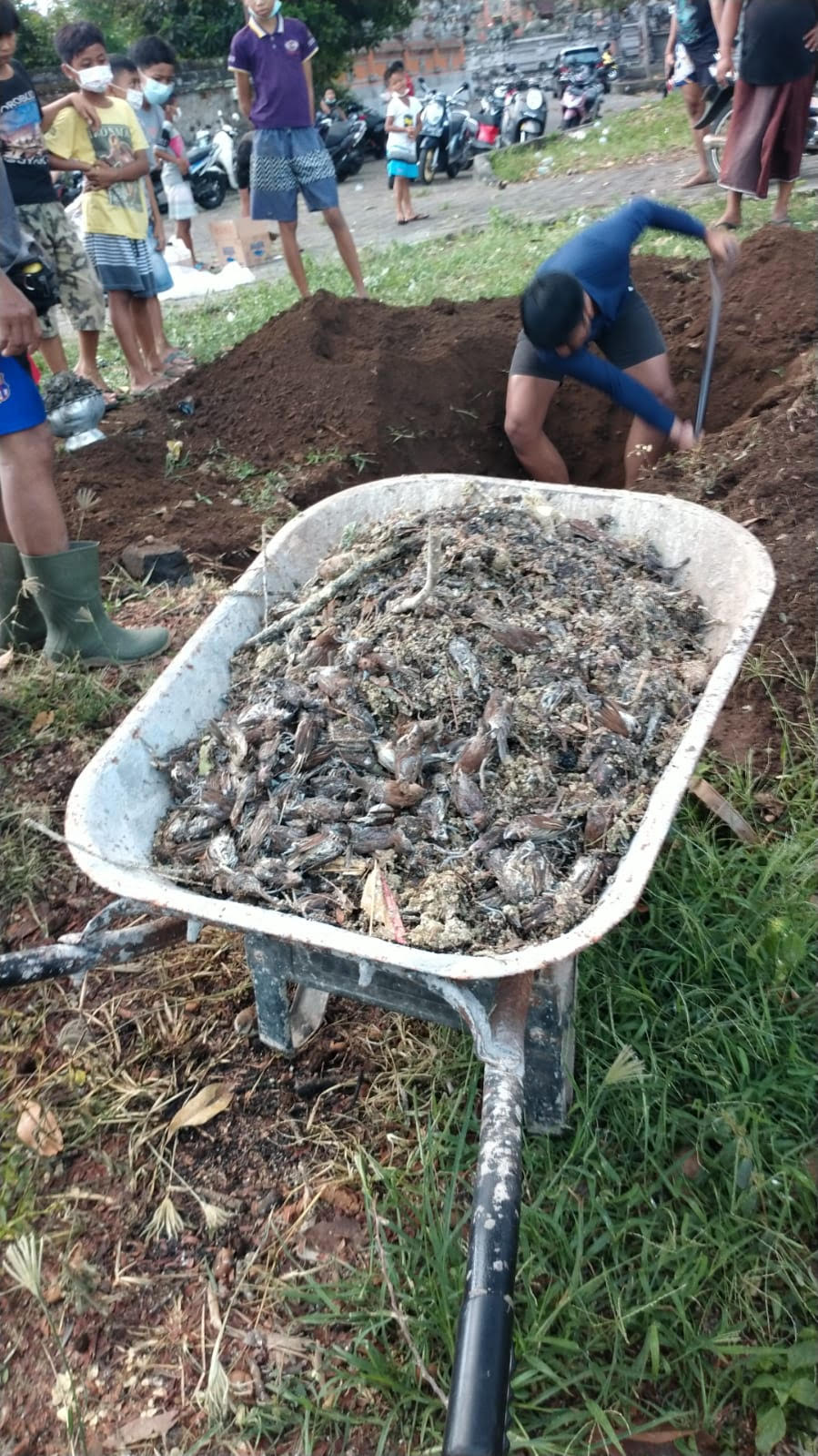 KUBURAN Banjar Sema, Desa Pering, Blahbatuh, tempat dikuburnya ribuan burung pipit. Foto: ist