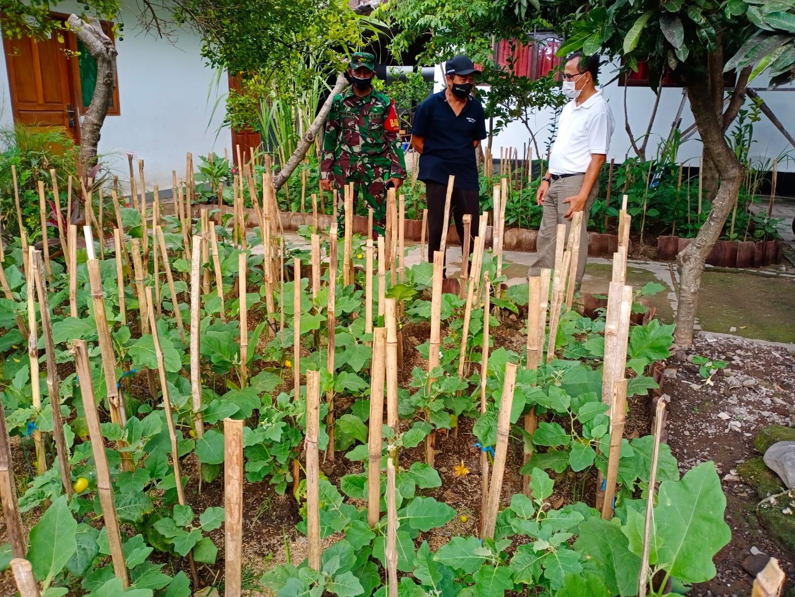 LAHAN kosong SMP PGRI 6 Denpasar dimanfaatkan Desa Dangin Puri Kelod untuk menanam aneka sayur mayur dan bumbu dapur untuk menyukseskan program ketahanan pangan desa. Kini lahan kosong milik sekolah juga dimanfaatkan untuk membuat rumah bibit. Foto: ist
