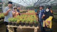 KETUA DPRD NTB, Baiq Isvie Rupaeda, saat mengunjungi kebun pertanian Petani Milenial Benteng Van Flower Lendang Nangka Utara, Kamis (21/10/2021). Foto: ist